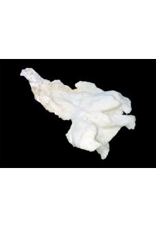 """Коралл """"Мерулина"""", """"Merulina"""" от 2700 руб."""