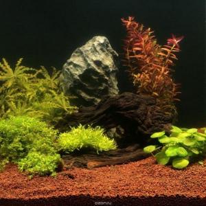 Всё о грунте для аквариума