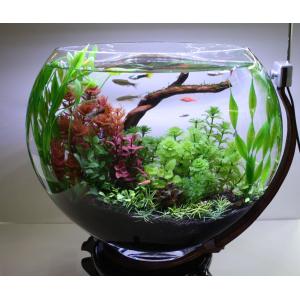 Составление композиций в аквариумах своими руками
