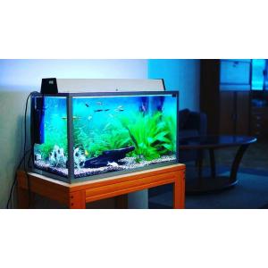 Купить лучший аквариум