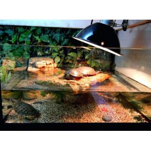 Ультрафиолетовая лампа для красноухих черепах