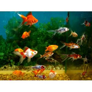 Всё про аквариумистику