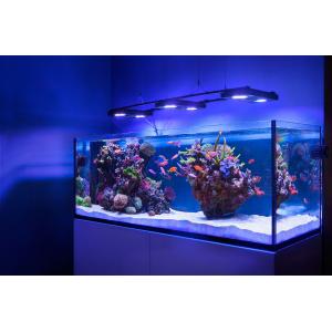Проводим подмену воды в аквариуме