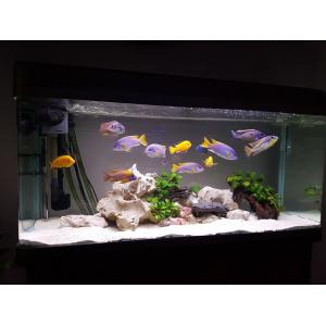 Содержание аквариума без растений