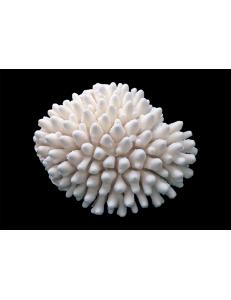 "Коралл ""Фингер"", ""Finger"" от 4625 руб."