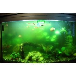 Из-за чего в аквариуме мутнеет вода