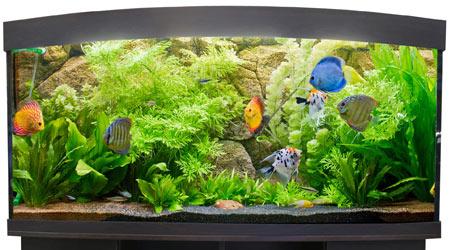 Купить панорамный аквариум
