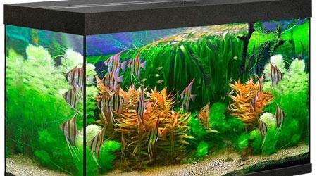 Купить прямоугольный аквариум