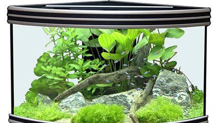 Купить угловой аквариум