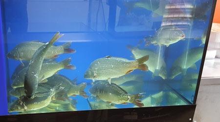 Купить аквариум для магазина